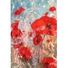 Provence - Les Coquelicots II