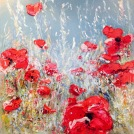 Provence - Les Coquelicots VIII