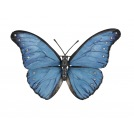 Morpho Rhetenor (Cramer\'s Blue Morpho Male)