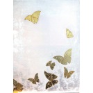 Morphing Butterflies White