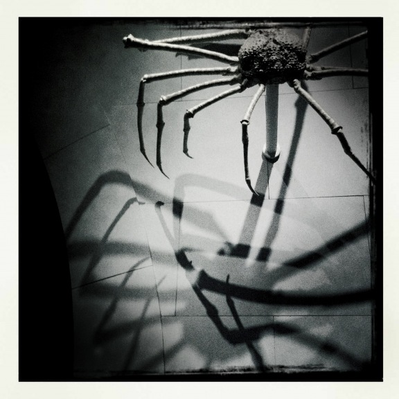 Homage to Louise Bourgeois